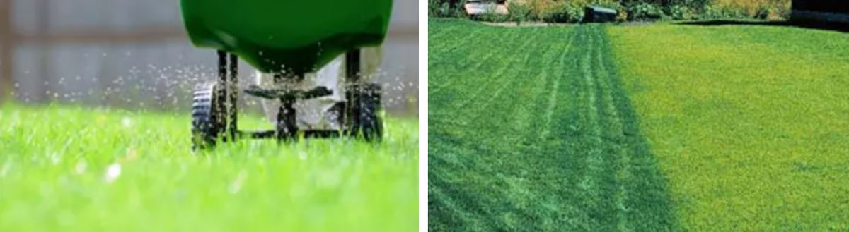 Lawn Mowing, Fertilizations, Weed Control and More